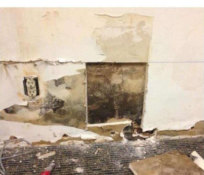 Mold Damage Can Be Messy in Anoka Before