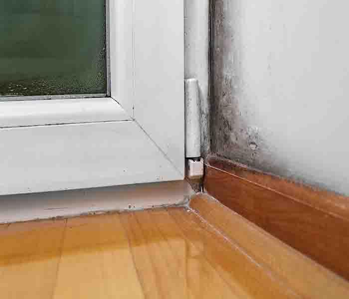 Mold Remediation Mold Damage In Andover - Homes With Mold Must Be Dealt With Quickly