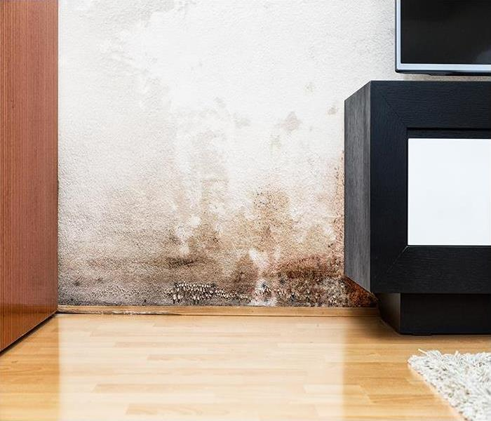 Mold Remediation Finding Mold Damage Behind Furniture In Your Minneapolis Dwelling