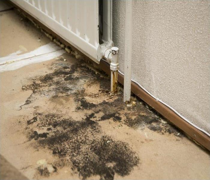 Mold Remediation Our Specialists Explain Our Methods Used In Our Mold Remediation Process In Columbia Heights