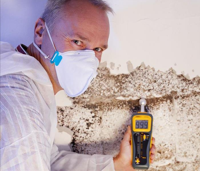Commercial A Brief Guide to Mold in the Workplace